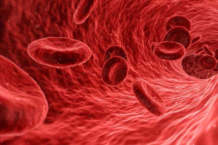 Erfassung Blutwerte